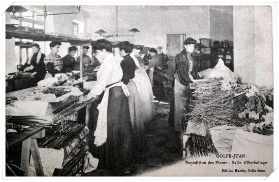 Salle d'emballage pour l'expédition des fleurs